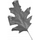 Leaves No.2 - Templates - Leaf 13