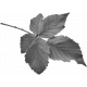 Leaves No.2 - Templates - Leaf 18