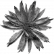 Dried Flowers- Templates- Flower 5