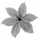 Flowers #01- Templates- Flower #2