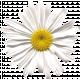 Secret Garden - Elements - Daisy