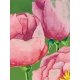 Renewal- Journal Cards Kit- Flowers- 3x4