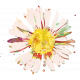 England - Flower Stamps - Daisy
