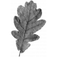 Leaves- Templates- Leaf 9