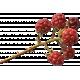 Thankful Harvest- Elements- Blackberries