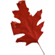 Thankful Harvest- Elements- Leaf 1