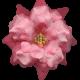 Flowers No.8- Flower 4