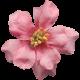 Flowers No.8- Flower 5