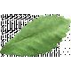 Picnic Day Elements - Leaf 1