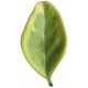 Leaves No.3 – Leaf 8