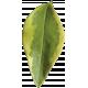 Leaves No.3 – Leaf 9