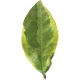 Leaves No.3 – Leaf 11