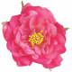 Flowers No.23 Flower 4