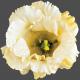 Flowers No.23 Flower 5