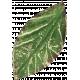 Leaves 07-02