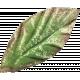 Leaves 07-03