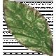 Leaves 07-04