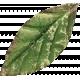 Leaves 07-05