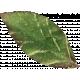 Leaves 07-06