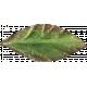 Leaves 07-07