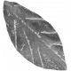 Leaves 07-01 Template