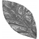 Leaves 07-04 Template