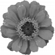 Flowers No. 25-04 Template