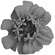 Flowers No. 25-05 Template
