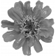 Flowers No. 25-07 Template