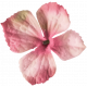 unwind pink flower