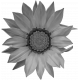 Flowers No.26 – Flower 02 Template