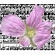 Flowers No.29-02
