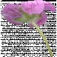 Flowers No.29-04