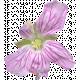 Flowers No.29-05