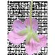Flowers No.29-08