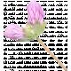 Flowers No.29-11