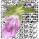 Flowers No.29-13