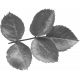Leaves No.12-08 template
