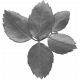 Leaves No.12-09 template