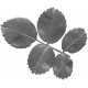 Leaves No.12-10 template
