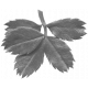 Leaves No.12-12 template