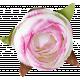 Flowers No. 1- Flower 5