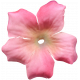 Flowers No.6- Flower 1