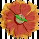 KMRD-Spicy Chili-flower1