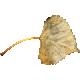 ErodedHues_leaf
