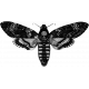 Butterfly Template 044
