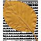 Yesteryear- Yellow Leaf