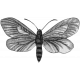 Butterfly Template 033