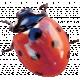Back To Nature- Ladybug 2