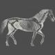 Chills & Thrills Horse Chalk Skeleton Stamp